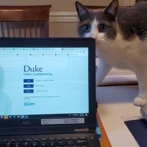 Cat peering over laptop screen